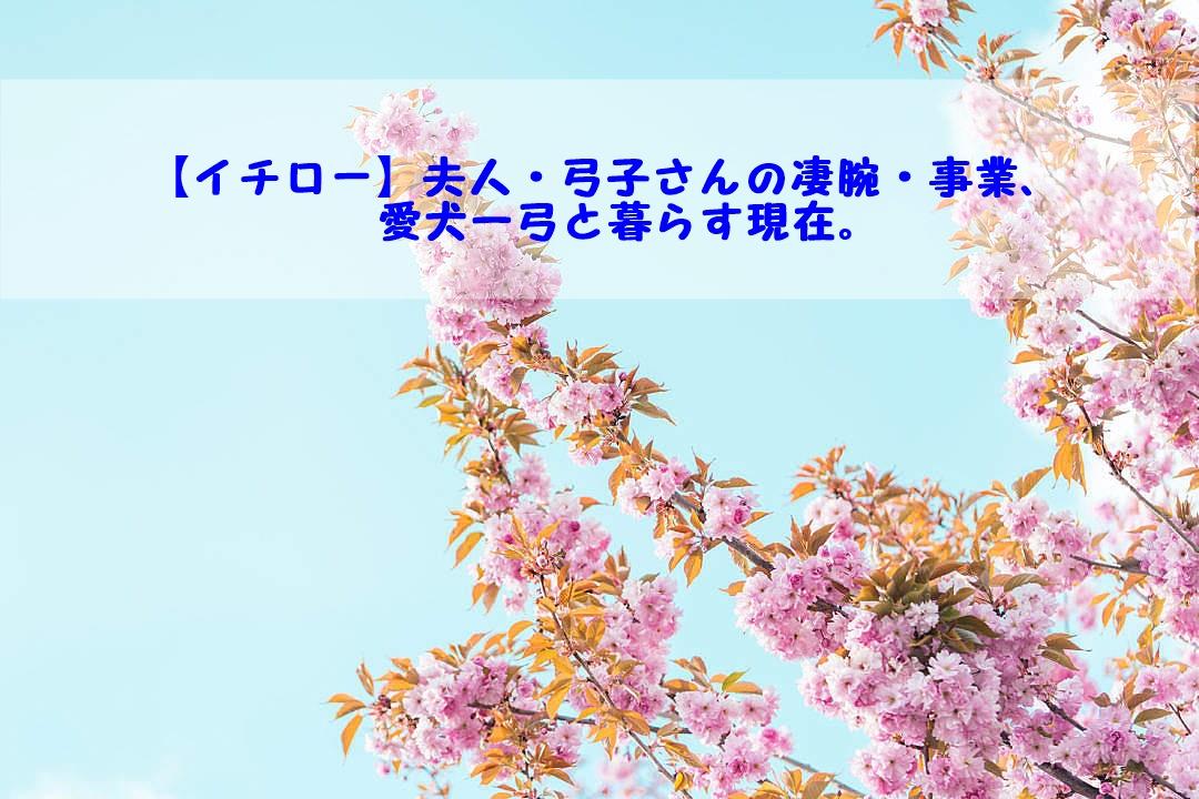 イチロー夫人、弓子さん、凄腕、事業、愛犬、一弓、現在