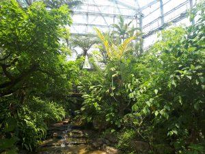 北関東、群馬、ぐんま昆虫の森、カブトムシ、昆虫、見たい、触れたい、場所