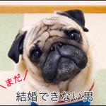 """【まだ結婚できない男】パグ犬可愛い!前作ケンちゃんに変わる""""太郎""""クン"""
