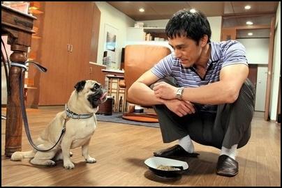 まだ結婚できない男 パグ犬 本名 田中太郎 犬ドル 所属は?